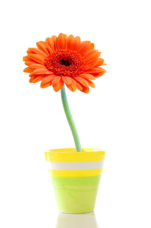 beautyful summer flower in pot with copyspace Stock Photo - 5115628