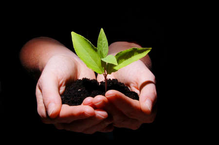 young plant in hand showing concept of youth and growth Stock Photo - 5125890