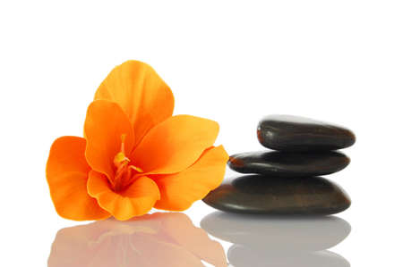 zen flower: flower isolated on white background showing spa and wellness still life