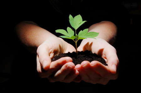 young plant in hands showing concept of environment and growth photo