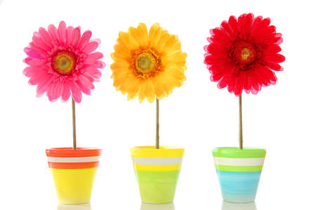 vases: happy spring flowers isolated on white background