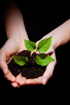 hands holding tree: hands plant and soil showing concept of growth Stock Photo