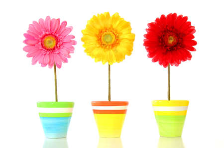 enjoy space: colorful spring flowers isolated on white background