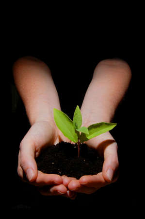 young plant in hand showing concept of youth and growth Stock Photo - 5466478