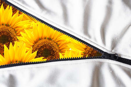 end of summer shown by flower behind zip Stock Photo - 5550086