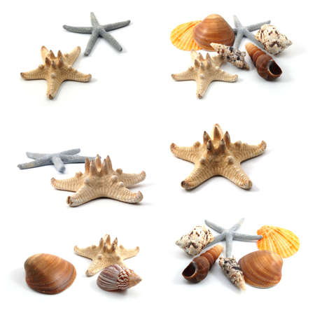 ocean creatures like seashells and starfish collection