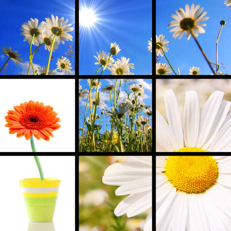 collage or collection of flower images showing summer vacation concept photo