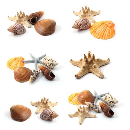 conchas: colecci�n de conchas de mar aislado sobre fondo blanco