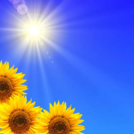 blue sky and sunflower showing summer concept Stock Photo