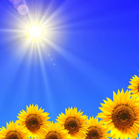 sunflower and blue sky showing summer concepty photo