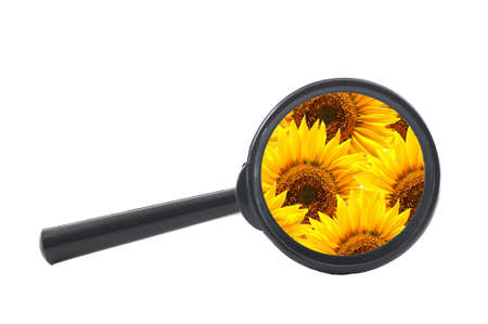 flower and magnifying glass showing summer concept                                     photo