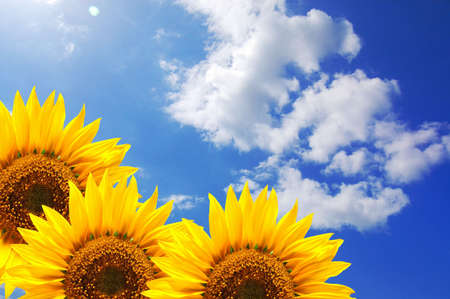 summer sun and copyspace on blue sky with flower photo