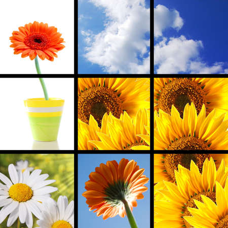 collage or collection of flower images showing summer vacation concept