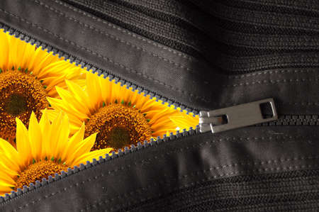 flower hidden behind a zip showing summer concept                                     Stock Photo - 6160557