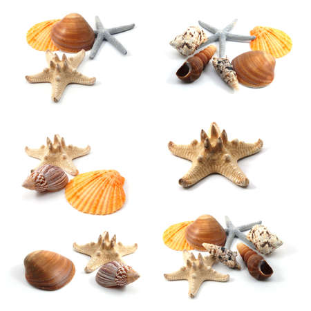 shell fish: seashells and starfish collection isolated on white background Stock Photo