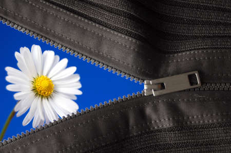 flower hidden behind a zip showing summer concept                                     Stock Photo - 6480788