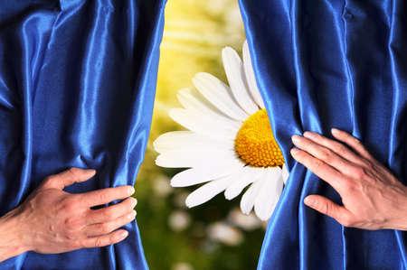 opening window: flores detr�s de la cortina azul pueden utilizarse como tarjeta de cumplea�os feliz o concepto de verano  Foto de archivo