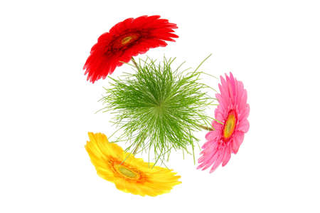 flower and grass microworld isolated on white background photo