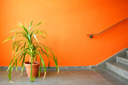 orange wall and pottet plant with copyspace showing real estate concept Stock Photo - 6995963