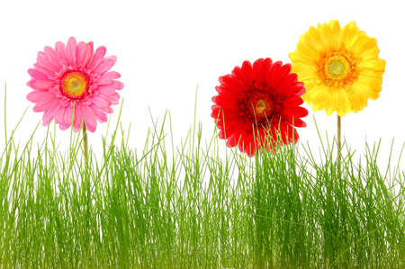 summer flowers and grass isolated on white background photo