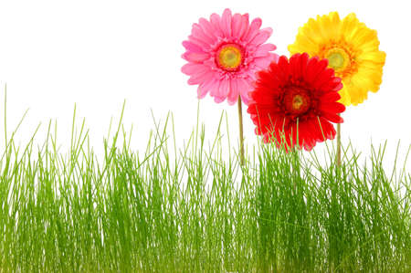 summer flowers and grass isolated on white background
