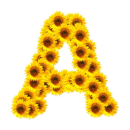 flower alphabet and numbers with sunflowers isolated on white background Stock Photo - 7055700