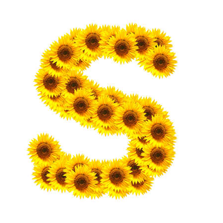 flower alphabet and numbers with sunflowers isolated on white background Stock Photo - 7055679