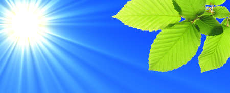 green leaf and blue sky with sun in summer Stock Photo - 7110940