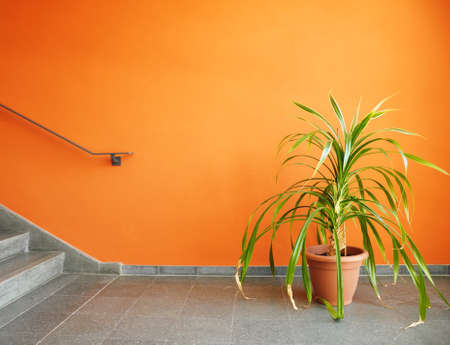 plant in pot on an orange wall with copyspace for a text message photo