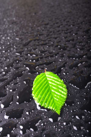 leaf and black background with rain water drops and copyspace photo