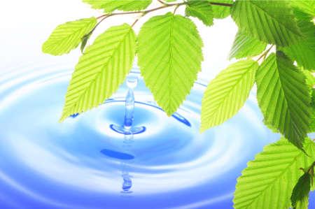 緑の葉と水のドロップパターン示すスパ禅やウェルネス コンセプト