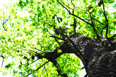 green summer trees in the woods or forest Stock Photo - 7280896