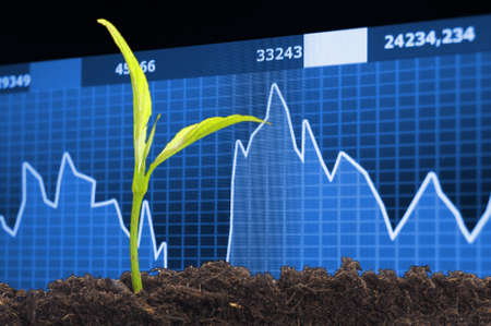 risky business: finance or business growth concept with young plant