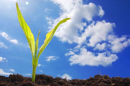 growth concept with growing young plant in nature Stock Photo - 7287369