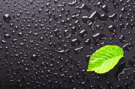 drops of water: leaf on wet black background with water drops showing summer or rain concept
