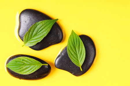 spa concept with yellow copyspace stone and green summer leaf Stock Photo - 7287431