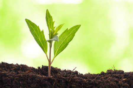 young plant showing ecology growth or nature concept with copyspace Stock Photo - 7331625
