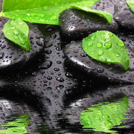 spa or zen still life with water drops reflection and grean leaves