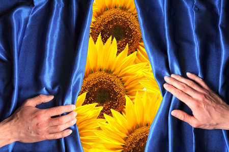 flowers behind blue curtain can be used as happy birthday card or summer concept photo
