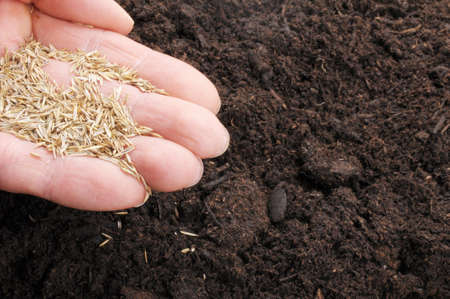 hand sowing seed on soil showing growth concept photo