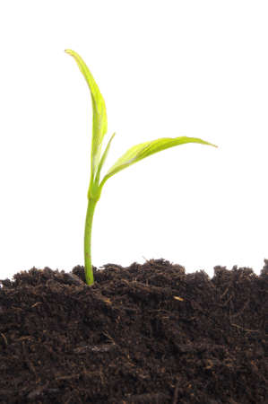 business growth concept with ypoung plant and soil on white background Reklamní fotografie