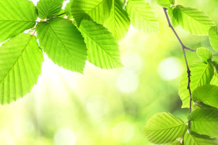 green summer leaves with copyspace showing nature concept Stock Photo
