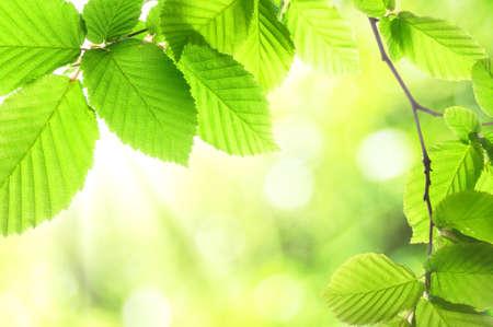 T verte des feuilles avec atelier montrant le concept de nature Banque d'images - 7387141