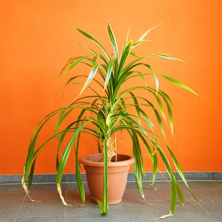 orange wall and pottet plant with copyspace showing real estate concept Stock Photo - 7387054
