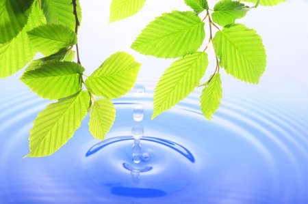 green leaf and water drop showing spa zen or wellness concept photo