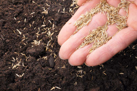 sow: hand sowing seed on soil showing growth concept