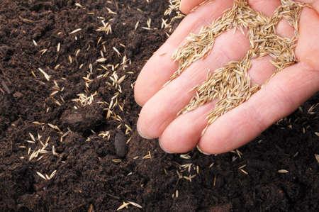 siembra: siembra de semillas en el suelo mostrando el concepto de crecimiento de la mano
