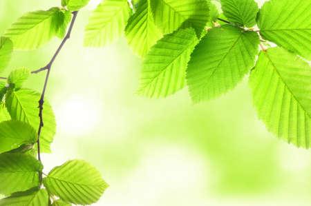 bladeren: zomer of voorjaar aard concept met groene bladeren en bokeh  Stockfoto