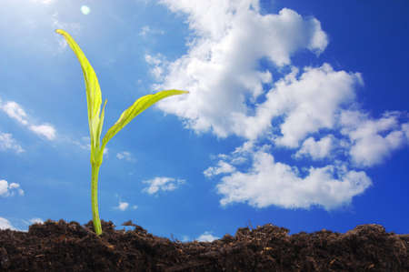 small plant: young plant and blue sky with copyspace showing growth concept