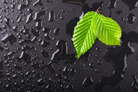 dewdrops: leaf and black background with rain water drops and copyspace Stock Photo